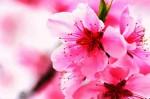 honey-blossom-e-liquid-new-orleans